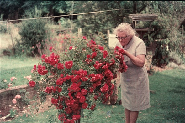 Photo:Mary Warnes in retirement, with her beloved roses, Whitesmiths [near Ringmer] summer 1972
