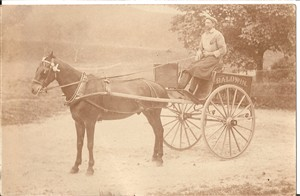Photo:Alfred Hills with Baldwins deivery cart c1915
