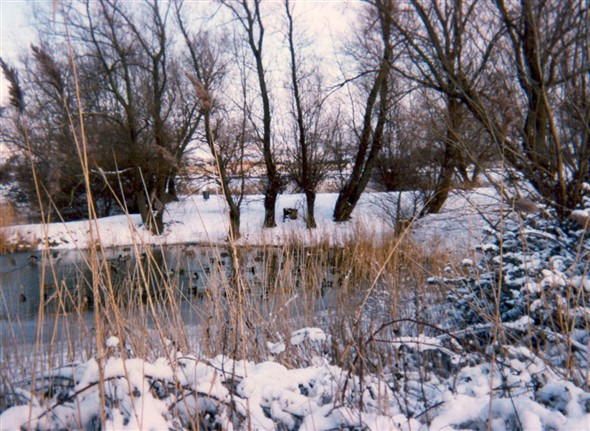 Photo:Valley Road ponds - winter 1998