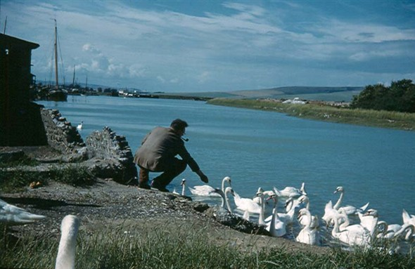 Photo:Feeding the swans by Denton Island